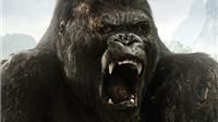 Phim 'King Kong' mới sẽ được quay ở Australia