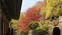 Có một Hàn Quốc xưa cũ (Bài 1): Lần theo dấu tích