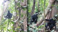 14 loài sinh vật ngoại lai đang đe dọa 'tấn công' Phong Nha - Kẻ Bàng