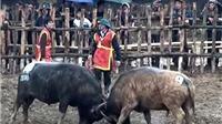Video du lịch: Xem trận chung kết 2016 tại lễ hội chọi trâu cổ xưa nhất Việt Nam
