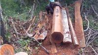 Gia Lai: Xử lý kỷ luật 15 cán bộ liên quan đến vụ phá rừng phòng hộ Ia Rsai