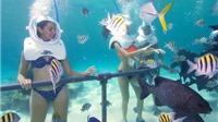 SỐC!!! Không biết bơi vẫn có thể đi bộ dưới đáy biển Cù Lao Chàm