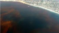 Vụ cá chết: Nhóm nguyên nhân do 'thủy triều đỏ' mà Bộ nói đến là gì?