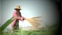 Vụ 'cây chổi quét rau': VTV bị phạt 50 triệu đồng và buộc phải cải chính xin lỗi