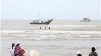 Xác minh thông tin phát hiện xác 2 con cá voi tại vùng biển Nghệ An