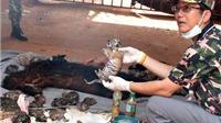 3 nhà sư ở Thái Lan bị truy tố về tàng trữ 40 xác hổ con trong tủ đá