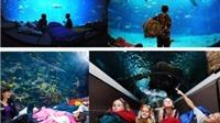 Trải nghiệm thú 'ngủ dưới đáy thủy cung' ngay tại Hà Nội