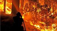 Indonesia điều 22.000 binh sĩ, cảnh sát và lính cứu hỏa dập tắt cháy rừng