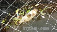 Cá chết ở Thanh Hóa không liên quan đến dịch bệnh