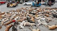 VIDEO: Đau xót cảnh thảm sát 700 con chó bằng thuốc độc giữa đường phố