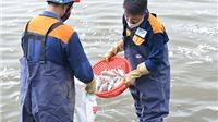 Cá chết Hồ Tây: Xử lý 200 tấn cá chết, 'bơm' oxy, làm sạch nước Hồ Tây