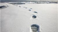 Tiếng động ghê rợn ở Bắc Cực khiến Canada sợ hãi, điều động máy bay