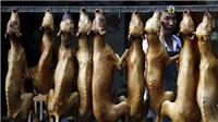 Đài Loan ban hành lệnh cấm ăn thịt chó và mèo