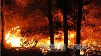 Điều tra vụ cháy rừng phòng hộ Nam Sơn, Hà Nội