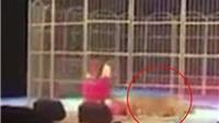 VIDEO: Làm việc kiệt sức, hổ kéo lê nhân viên xiếc trước mặt khán giả