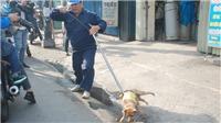 Thành phố Hồ Chí Minh: Tiếp tục bắt giữ chó thả rông