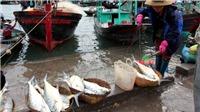 Quy hoạch huyện đảo Vân Đồn, đơn vị hành chính kinh tế đặc biệt phải có tầm nhìn dài hạn