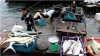 Huyện đảo Vân Đồn: Cú hích từ cơ chế đặc khu hành chính – kinh tế
