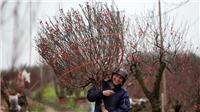 Về Nhật Tân thương nhớ 'dinh đào'
