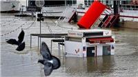 Cảnh sông Seine vỡ bờ, Thủ đô Paris chìm trong nước