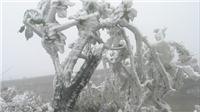 Chùm ảnh: Băng giá nhuộm trắng đỉnh núi Phia Oắc trong cái lạnh -9 độ C