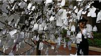 'Cây Nguyện ước' của vợ John Lennon được 'trồng' tại Hà Nội