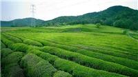 Vi vu Châu Á thưởng thức tinh hoa trà các nước
