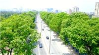 Từ nay đến 30/11 sẽ 'khai tử' 1.289 cây xanh trên đường Phạm Văn Đồng