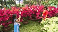 Cấm tổ chức chợ hoa Tết Mậu Tuất 2018 trên vỉa hè, lòng đường