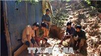 Táo tợn đào 'địa đạo' trong nhà để khai thác vàng lậu