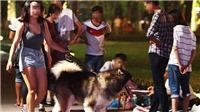 Hành vi 'thả rông' chó nơi công cộng bị phạt tiền 600.000 - 800.000 đồng
