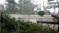 VIDEO: Tổng hợp nhanh thiệt hại bão số 12