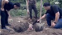 Xem tập 42 'Người phán xử': Hương 'Phố' chỉ chỗ Phan Hải được 'làm người' khi bị 'chôn sống'