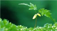 Việt Nam hợp tác mạnh mẽ với các nước trong khu vực cùng bảo vệ môi trường