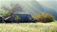 4 địa điểm ngắm hoa cải nở trắng trời tại Mộc Châu