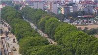 Đường Phạm Văn Đồng: Hà Nội chặt cây cong, di chuyển cây thẳng