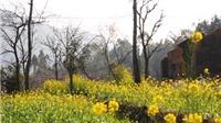 Hoa nở rực trời biên cương