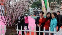 Lễ hội hoa anh đào 2014 được tổ chức tại Hà Nội