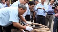 Việt Nam đề xuất tiêu hủy kho sừng tê giác ngà voi