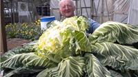 Người đàn ông ở Anh lập kỷ lục trồng cây súp lơ lớn nhất thế giới