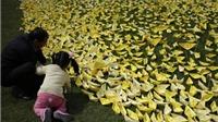 Hàn Quốc đính chính số người sống sót trong thảm kịch đắm phà Sewol