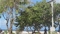Vườn hoa mang tên Đại tướng trên đảo Sơn Ca
