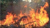 Cháy rừng tại Nghệ An: Thiệt hại hơn 90 ha rừng