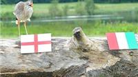 Các 'hậu duệ' của Bạch tuộc Paul: Muôn loài tham gia dự đoán World Cup
