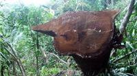 Khởi tố vụ phá rừng quy mô lớn tại Quảng Nam