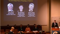 Giải Nobel Y học 2014 thuộc về ba nhà khoa học Mỹ và Na Uy