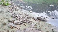 Vòng luẩn quẩn của dịch bệnh và ô nhiễm môi trường