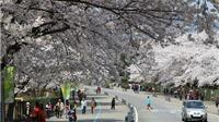 Hàn Quốc đặt mục tiêu đón 200.000 du khách Việt