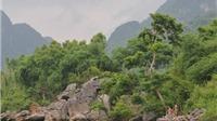 Đầu tư hơn 2 triệu Euro cho Vườn Quốc gia Phong Nha - Kẻ Bàng