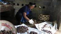 'Nỗi buồn' đặc sản hạt dẻ Trùng Khánh: Vào tận vườn vẫn nhặt phải hạt dẻ Trung Quốc